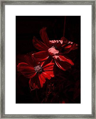 In The Cosmos Framed Print by Yvonne Scott