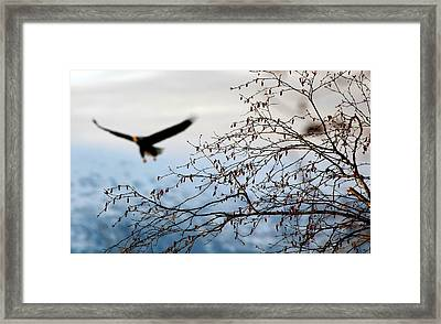 In The Distance Framed Print by Carrie OBrien Sibley