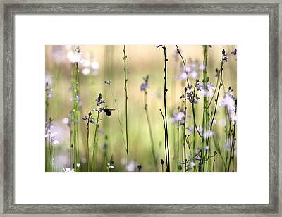 In The Field - Cards Framed Print by Travis Truelove