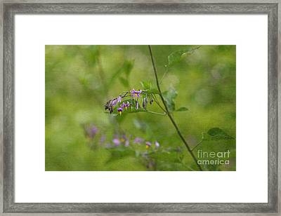 In The Garden Framed Print by Beve Brown-Clark Photography