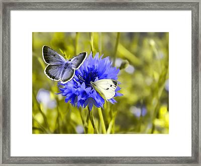 In The Garden Framed Print by Sharon Lisa Clarke