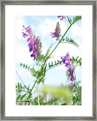 In The Grass Framed Print by Ioana Geacar