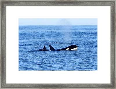 In The Great Wide Ocean Framed Print