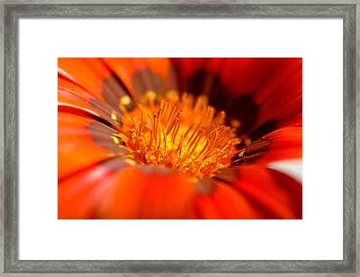 In The Heart Of Flower Framed Print
