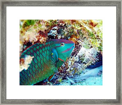 In The Lair Framed Print by Li Newton