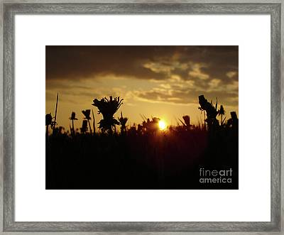 Framed Print featuring the photograph In The Middle Of Grass by Bruno Santoro
