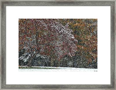 In The Midst Of The Storm Framed Print by Kimberly Little