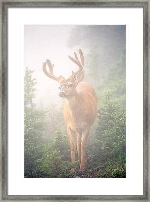 In The Mist Framed Print by Tom and Pat Cory