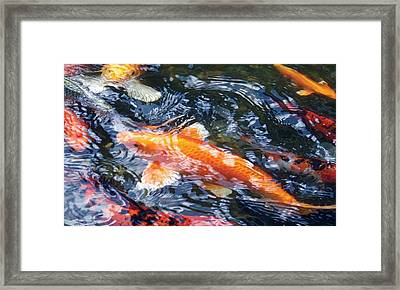 Framed Print featuring the photograph In The Mix by Dan Menta