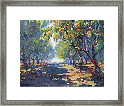 In The Peach Orchard Framed Print by Margaret  Plumb