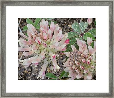 In The Pink Framed Print by Jen TenBarge