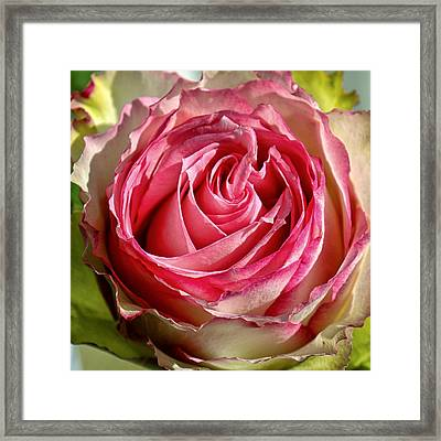 In The Pink Framed Print by Lauri Novak
