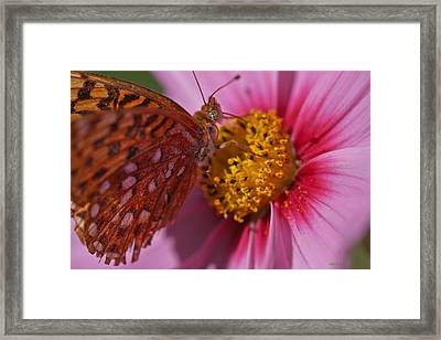In The Pink Framed Print by Mitch Shindelbower