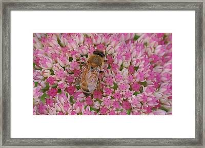 In The Pink Framed Print by Ronda Broatch