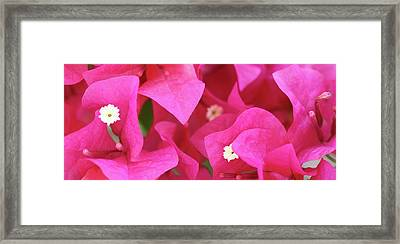 In The Pink Today Framed Print by Andrea  OConnell