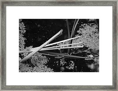 In The Pond Asian Influence Framed Print