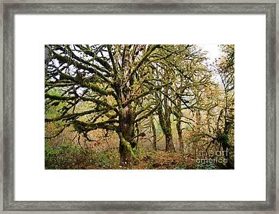In The Rain Forest Framed Print