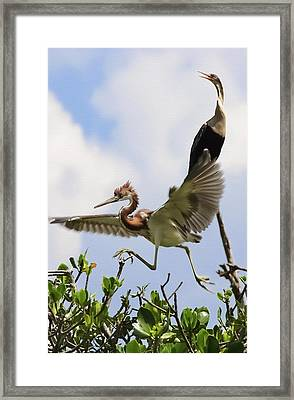 In The Rookery Framed Print by Patrick M Lynch