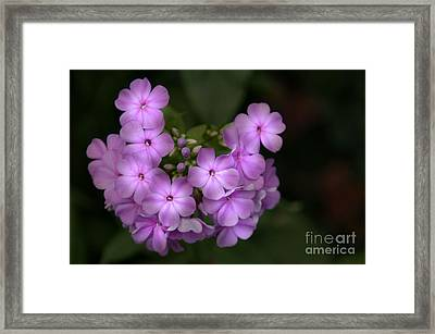 Framed Print featuring the photograph In The Spotlight by Tamera James