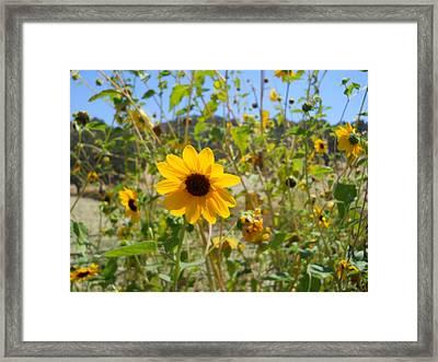 In The Sun Framed Print