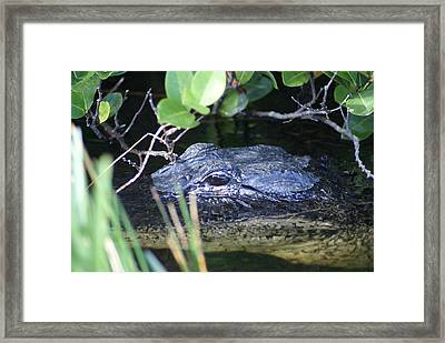 Framed Print featuring the photograph In The Swamp by Jerry Cahill