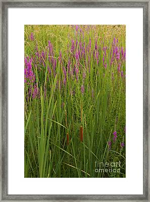In The Tall Grass Framed Print by Mike Flake