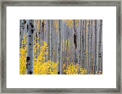 Framed Print featuring the photograph In The Thick Of Things by Jim Garrison