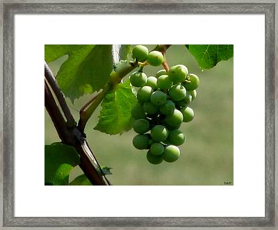 In The Vineyard Framed Print by Debra     Vatalaro