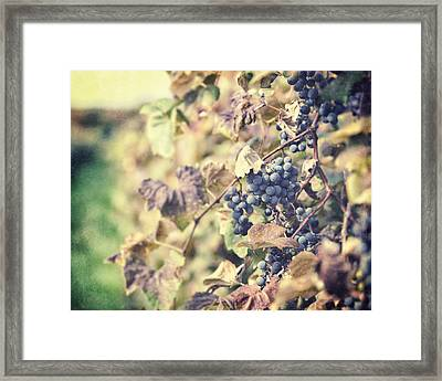 In The Vineyard Framed Print by Lisa Russo