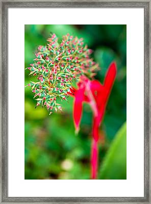 In The Wild Framed Print by Mike Rivera
