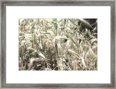 In The Wind Framed Print by Hideaki Sakurai