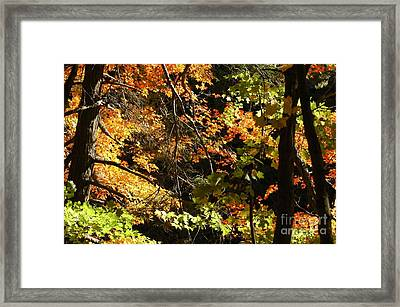 In The Woods Framed Print by Kathleen Struckle