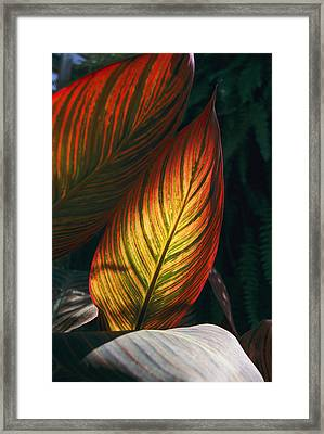 In This Vertical View, Sunlight Framed Print by Stephen St. John