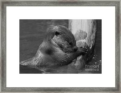 In Thought  Framed Print by Gary Bridger