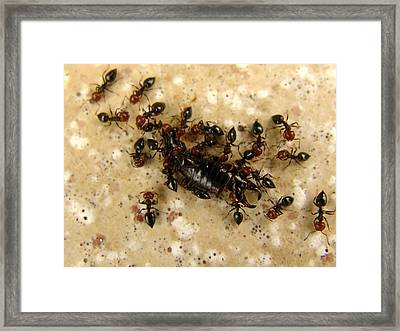 In Union There Is Strength Framed Print by Alessandro Della Pietra