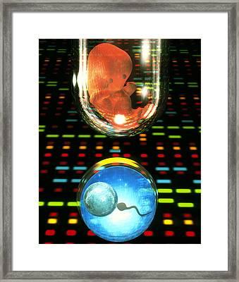 In Vitro Fertilization Framed Print by Laguna Design