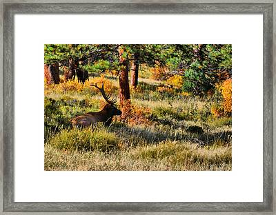 In Wait Framed Print by Emily Stauring