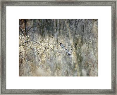 Inconspicuous Framed Print