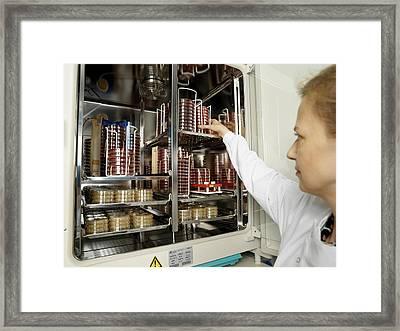 Incubating Bacteria Framed Print by Tek Image
