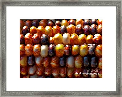 Framed Print featuring the photograph Indian Corn by Barbara McMahon