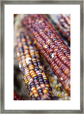 Indian Corn Framed Print by Brian Yarvin
