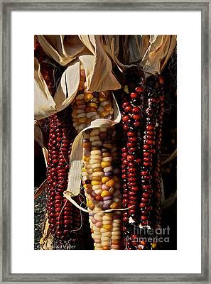 Indian Corn Framed Print by Susan Herber