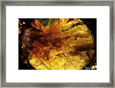Indian Fall  Framed Print