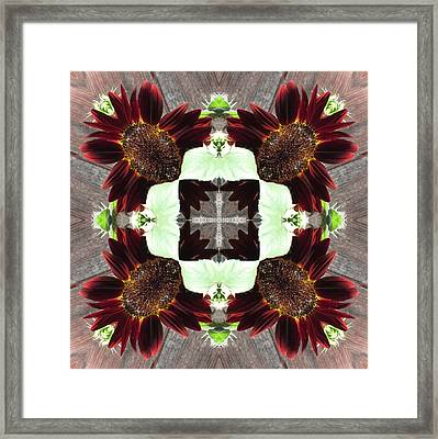 Indian Red Sunflowers Framed Print