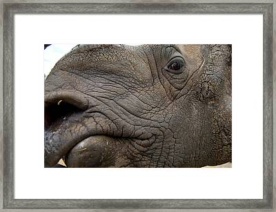 Indian Rhinoceros Rhinocerus Unicornis Framed Print