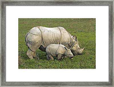 Indian Rhinoceroses Framed Print
