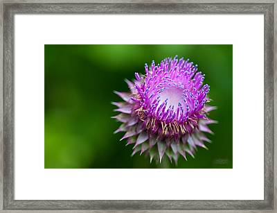 Indiana Purple Thistle Flower Framed Print by Melissa Wyatt
