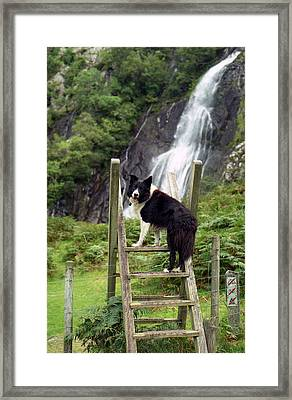 Indy At Aber Falls Framed Print by Michael Haslam