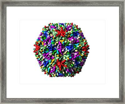 Infectious Bursal Disease Virus Particle Framed Print by Laguna Design