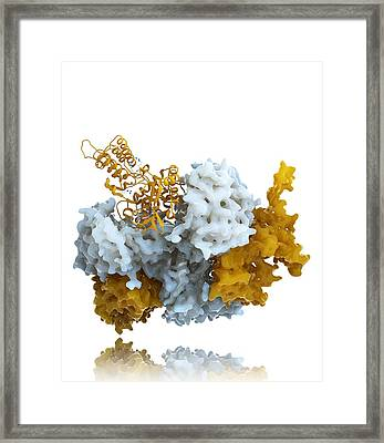 Influenza Nucleoprotein, Molecular Model Framed Print by Ramon Andrade 3dciencia